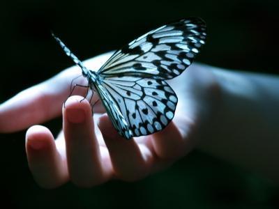 expozitia-fluture